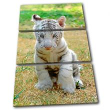 Baby White Tiger Animals - 13-1228(00B)-TR32-PO